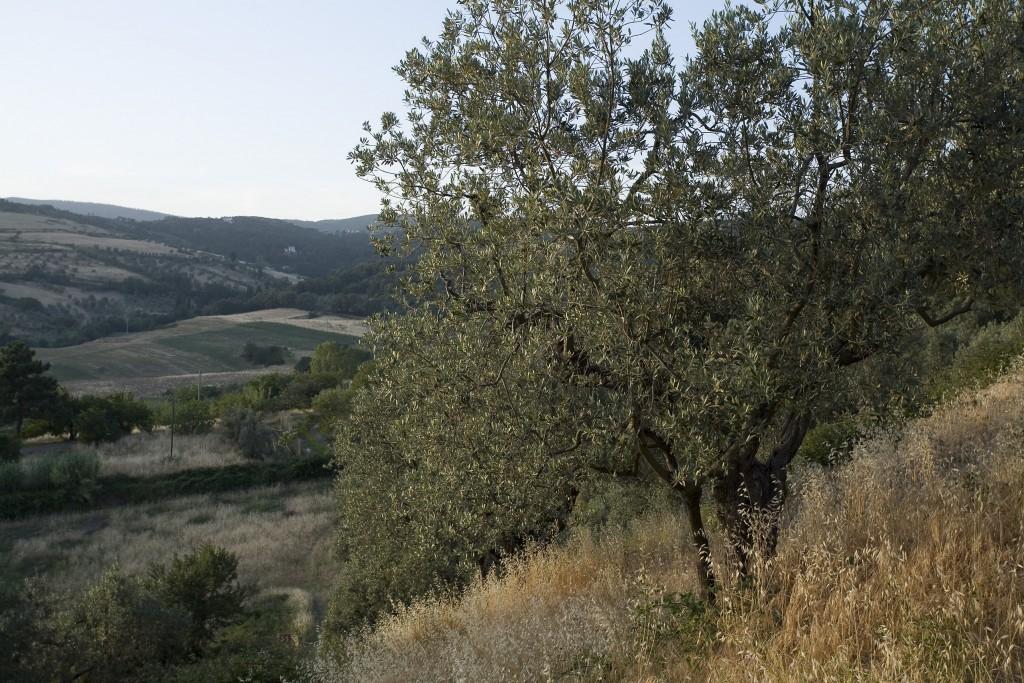 Caiarossa - Habitat 6