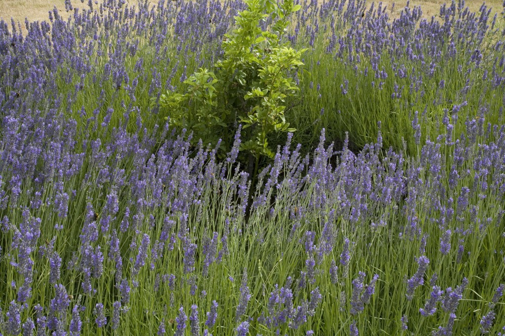 Caiarossa - casa privata  giardino 2