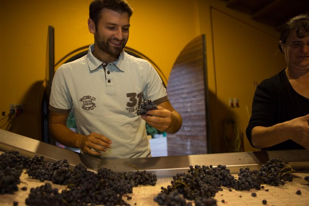 selezione uva con Julian Reneaud